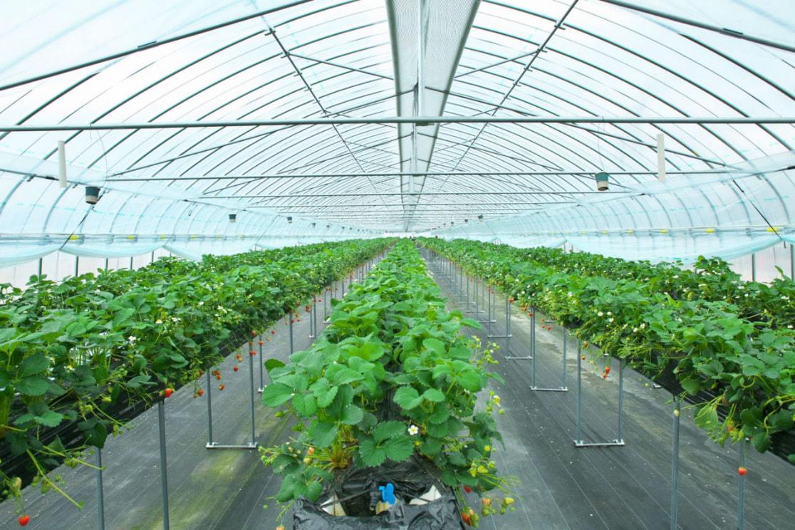 オーダーメイド栽培システム1