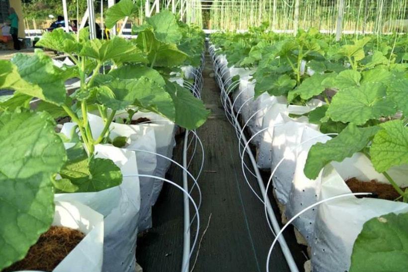 海外農業指導2